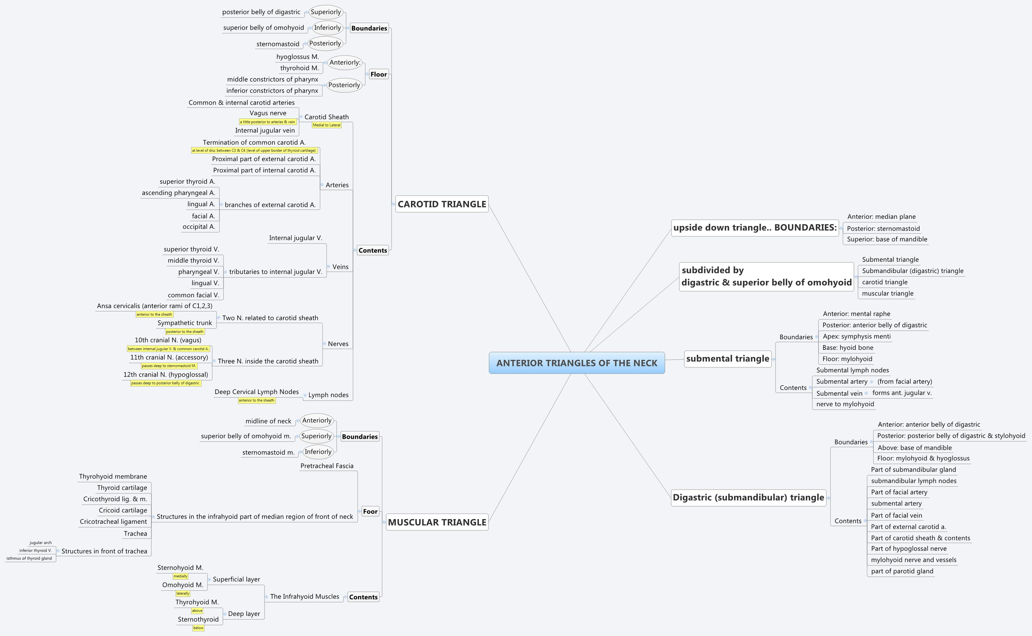 mind_maps - download_center > Archive > 2nd > 428 > Term_1 > Anatomy ...